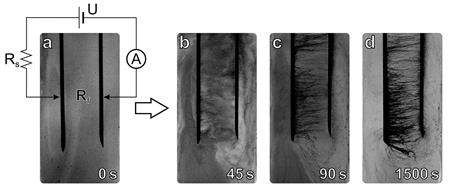 Consecutive snapshots of the sample illustrating the formation of nanotube chains. The distance between electrodes is 1 cm, applied voltage is 400 V, and the series resistor is 100 MOhm. Panel (a) demonstrates the photograph of the ER fluid before the voltage is applied and the schematic of the experimental setup. The following photographs are taken after 45, 90, and 1500 seconds of interaction with the electric field. Originally printed in Scientific Reports, 5, article number 8323, doi 10.1038/srep08323. Reprinted with the permission of the authors.