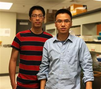 (l-r) BioE graduate student Chen Liao, first author of the PNAS article, in the lab with Assistant Professor Ting Lu.