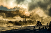 Steam from an Old Faithful eruption is more spectacular in winter because of the direct contact between the steam and the cold air. There is a silhouette of a bison cow absorbing the heat from the morning sun below the steam cloud. (Photo by Tom Murphy.)