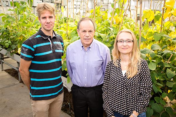 Stephen P. Long, professor of Crop Sciences and of Plant Biology and member of the Bioengineering Graduate Program Faculty (center), is pictured with postdoctoral researchers Johannes Kromdijk (left) and Katarzyna Glowacka (right). The team increased plant yield by altering a mechanism plants use to protect themselves from excess solar energy. Photo by L. Brian Stauffer