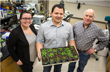 During photosynthesis in C3 crops, such as wheat and rice, the enzyme Rubisco will react with oxygen (instead of carbon dioxide) creating a plant-toxic compound that must be recycled, wasting energy. University of Illinois researchers -- including USDA/ARS scientist Paul South (center), USDA/ARS scientist Don Ort (right), and Amanda Cavanagh -- report in Plant Cell the discovery of a key protein in this process, which they hope to manipulate to increase plant productivity.