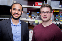 University of Illinois biochemistry professor Auinash Kalsotra, left, graduate student Joseph Seimetz and their colleagues identified a mechanism that allows heart cells to grow larger by producing more proteins.