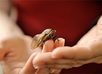Cicada wings may inspire new surface technologies