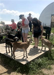 Participants in the Human-Animal Studies Summer Institute visited Prairie Fruits Farm in Urbana to discuss small-scale faming. (Photo courtesy of Jane Desmond)