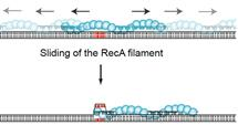 Taekjip Ha reported in the inaugural issue of open access journal eLife  that RecA filament slides on DNA strands