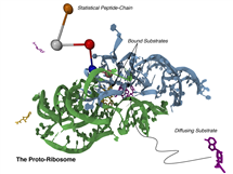 Evolutionary analysis of ribosome structures and sequences by Yonath and Woese has suggested fragments of a proto-ribosome, near the peptidyl-transferase center (PTC) might have functioned as such a ribozyme