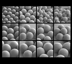 Microscope images of uniform and monodisperse hydrogel microspheres fabricated with Kim and Choi?s new method.  The journal Macromolecular Bioscience featured these images on the cover of its April 10, 2007, issue. The top left image shows chitosan microspheres 15 microns in diameter.