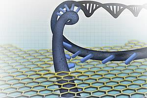 Nanopore-based DNA sequencing concepts generally entail one of the DNA strands passing through the nanopore sensor, where the individual nucleotides are distinguished from each other.
