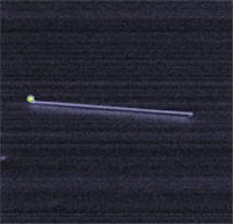 A nanowire in the process of growing in-plane, attracted by the gold nanoparticle on the left.