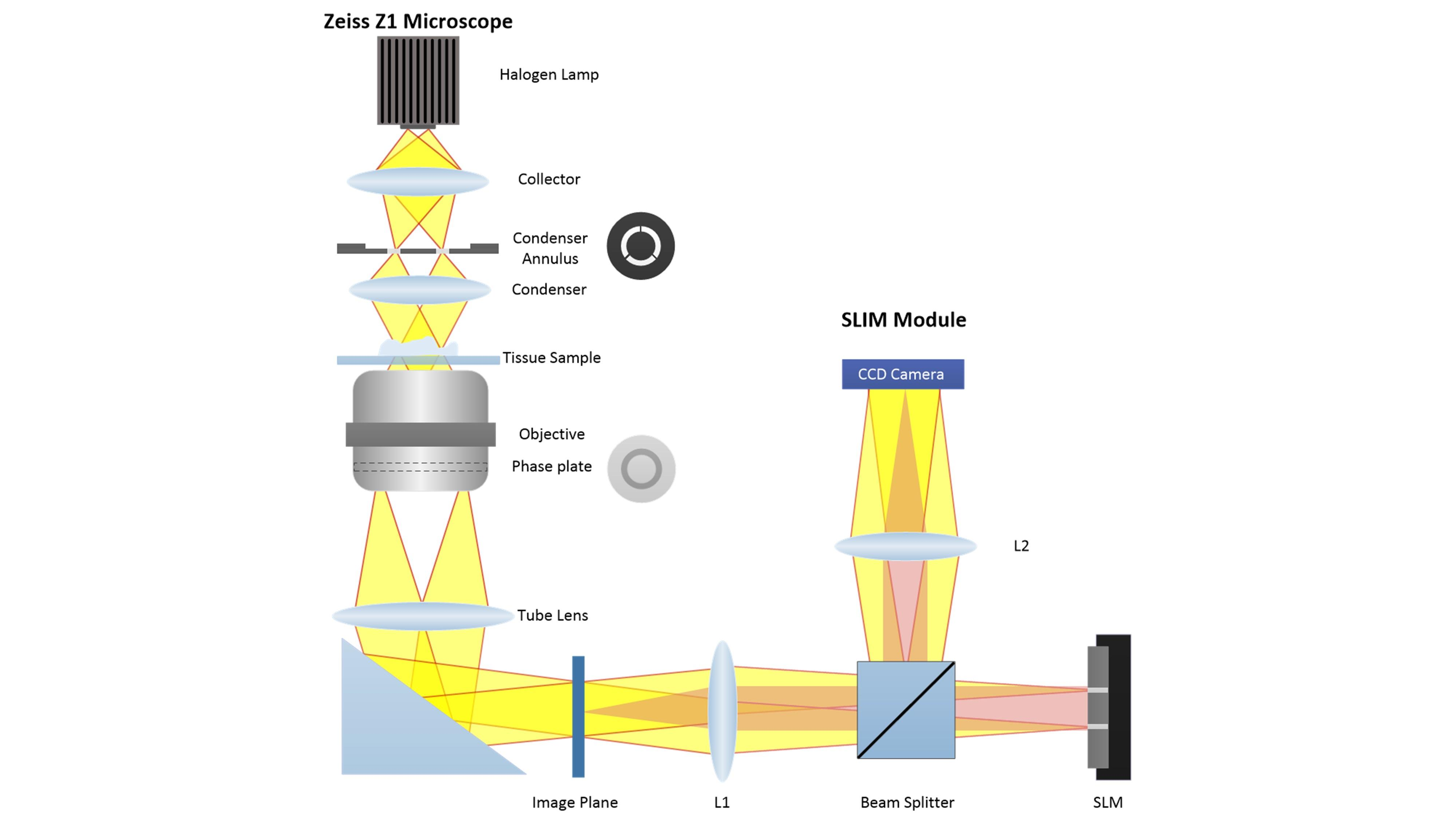 This invention uses an interferometer, which uses two beams of light, one that is kept as a reference and one that, when it goes through a sample, is modified.