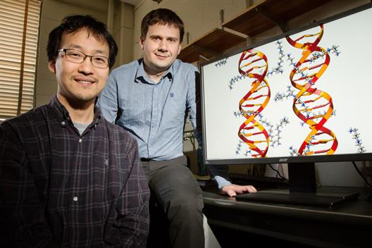 Illinois postdoctoral researcher Jejoong Yoo, left, and professor Aleksei Aksimentiev found that molecules of DNA directly interact with each other based on their sequences. Photo by L. Brian Stauffer