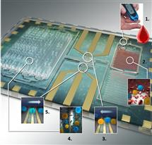 Differential immuno-capture biochip schematic: 1. Ten microliters of blood is infused into the biochip. 2. Erythrocytes were lysed and the leukocytes were preserved using as custom-made lysing and quenching buffers get mixed with blood. 3. The leukocytes pass over co-planar platinum microfabricated electrodes and are counted. 4. Specific cell antibodies e.g. monoclonal CD4 T cell antibody is initially adsorbed on the capture chamber. CD4 T cells get captured as they interact with the antibodies in the chamber. 5. Remaining leukocytes gets counted again with second counter. The difference in the respective cell counts give the concentration of the cells captured.