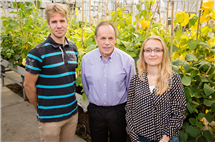 Stephen P. Long, a professor of crop sciences and of plant biology, center, with postdoctoral researchers Johannes Kromdijk, left, and Katarzyna Glowacka, increased plant yield by altering a mechanism plants use to protect themselves from excess solar energy.