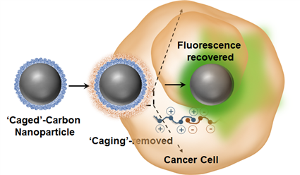 'Caged' non-fluorescent carbon dot enters the cancer cell, loses its caging and lights up.