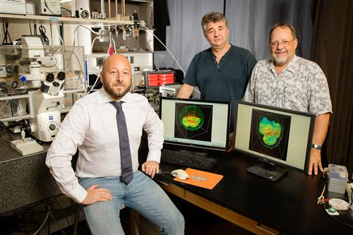 Marcello Rubessa, Gabriel Popescu and Matthew B. Wheeler teamed up to produce 3-D images of live cattle embryos that could help determine embryo viability before in vitro fertilization in humans. (Photo by L. Brian Stauffer)