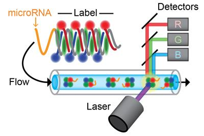 The schematic depicts the new SM-Flow technology. A microRNA molecule (orange) is extended with light-emitting labels (blue, green, and red) before injection into a microfluidic channel, in which the molecules are detected one by one as they pass through a laser beam. The light emitted from each molecule is measured in detectors for blue, green, and red light.