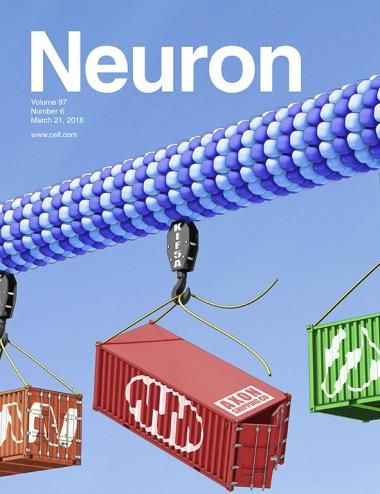 Paper featured on the cover of the March 21, 2018, issue of Neuron. The cover image shows neuronal axon transport going to the neuromuscular synapse. Artwork by Ethan Tyler of the NIH Medical Arts Department.