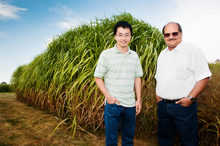 Professor Praveen Kumar, right, and graduate student Phong V.V. Le found that bioenergy crops such as miscanthus and switchgrass use more water than corn, a consideration that has been left out of the cost-benefit analysis for land conversion.
