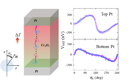 Schematic of a heat current via magnetic excitations within the antiferromagnet Cr2O3 sandwiched between two platinum (Pt) layers.  As the magnetic field is rotated from being parallel to the heat current and antiparallel there are different voltages developing on both ends of the antiferromagnet, which are characteristic for the behavior of either the blue or red magnetic moments, respectively.