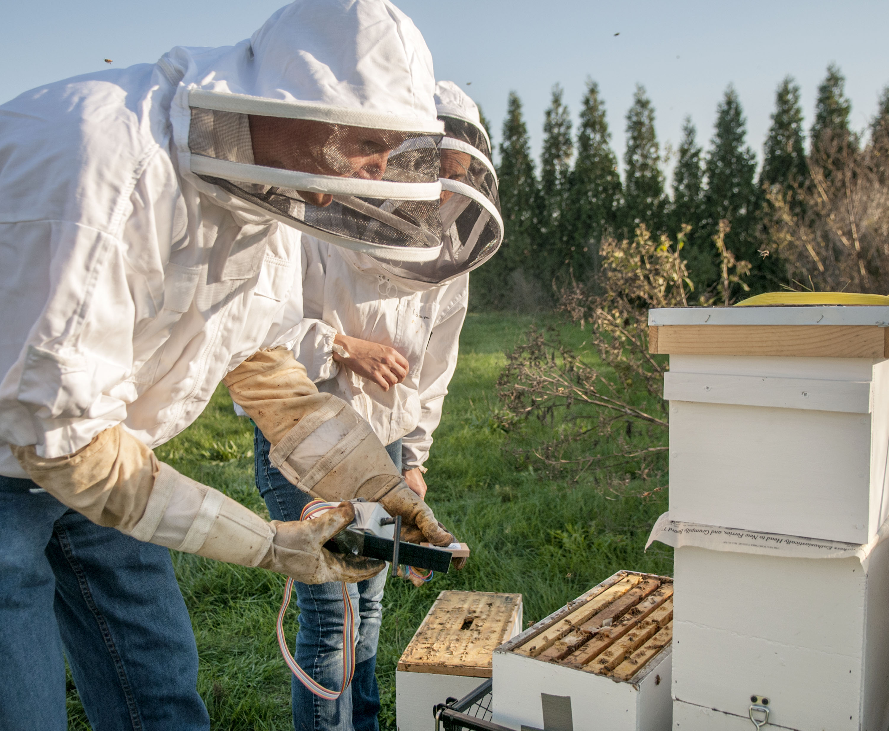 Schmitz (left) and Sankey slot the first sensor in an outdoor beehive. The second sensor inside the lab's Waggle World allows Sankey to compare the bees' overwintering survival in hives both indoors and outdoors.
